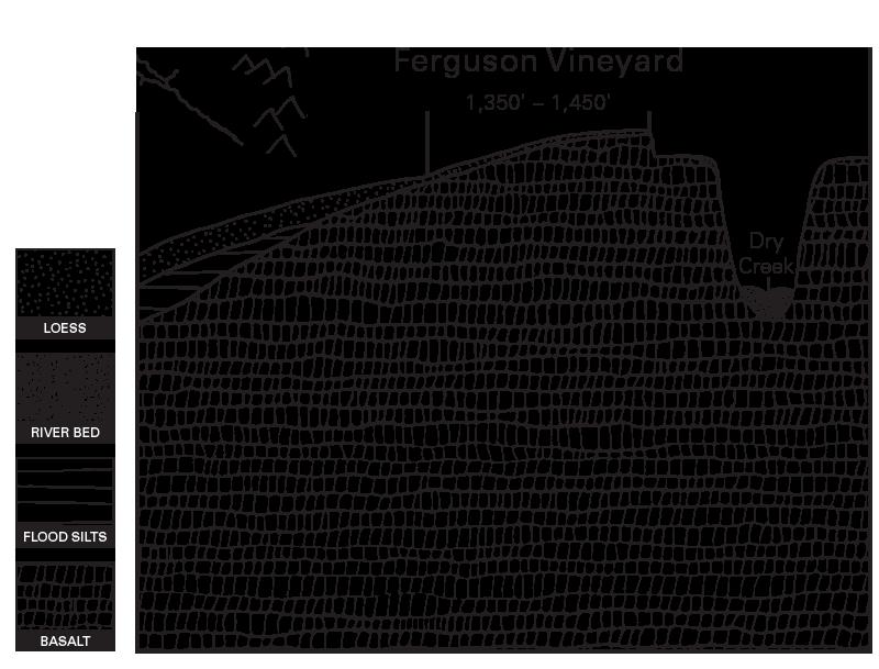 Estate Ferguson Vineyard Illustration