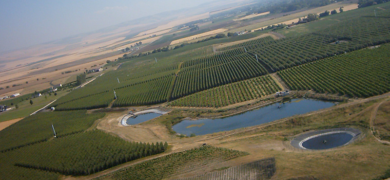 Pepper Bridge Vineyard