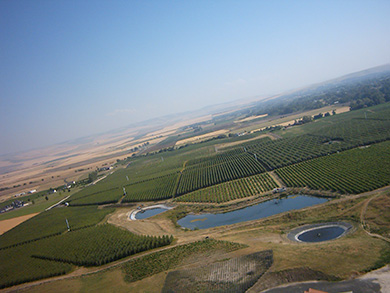 Pepper Bridge Vineyard aerial