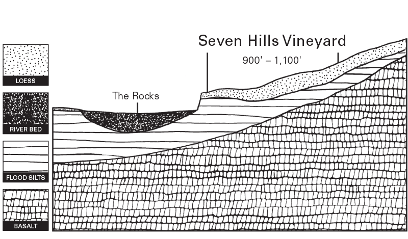 Estate Seven Hills Vineyard Illustration