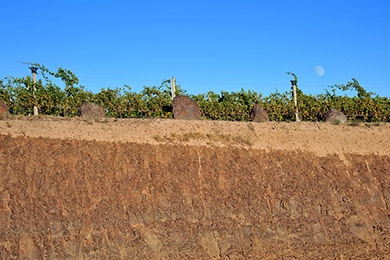 Ferguson Basalt Wall, Ferguson Vineyard