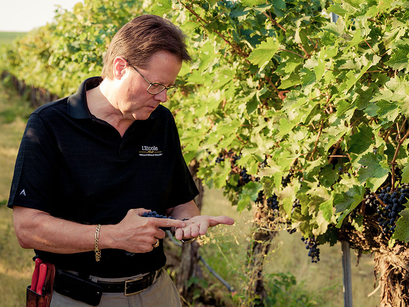 Marty's focus is in the vineyards