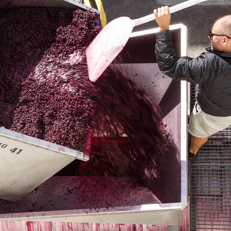 Winemaking Grapes