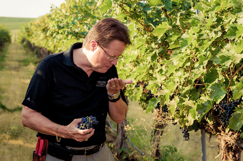 Marty tasting grapes for ripeness.
