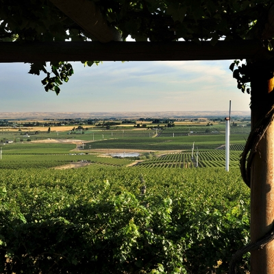 The view from the gazebo at our Estate Seven Hills Vineyard.