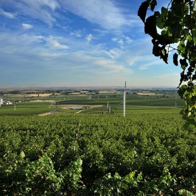 Estate Seven Hills Vineyard