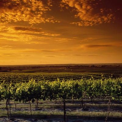 Sunset at our Estate Seven Hills Vineyard.