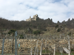 Stone terraced vineyards in the Krems region of Wachau Austria